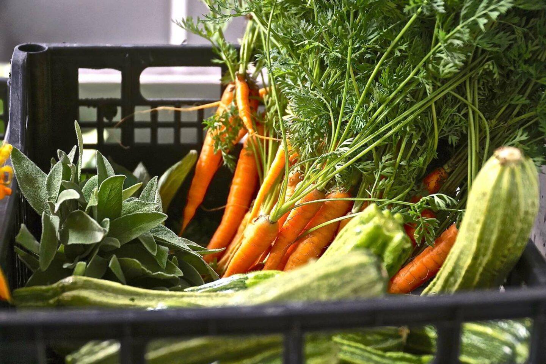 cassetta con ortaggi: carote, zucchine, odori